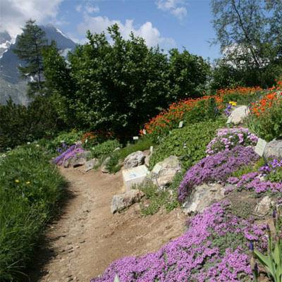 Parcourez les sentiers fleuris de la vallée d'Eyne