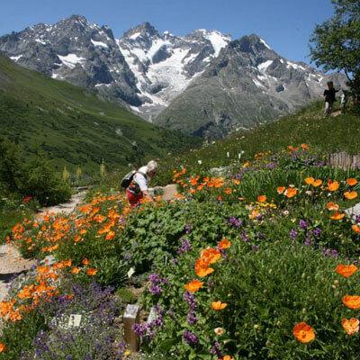 Découvrez toutes les variétés de fleurs qui s'épanouissent dans cette vallée préservée
