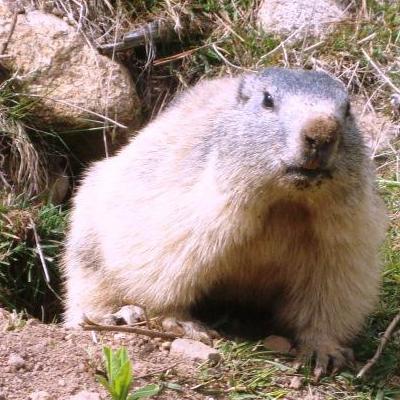 Vous aurez tout de même plus de chance d'admirer les marmottes quand il fait soleil!