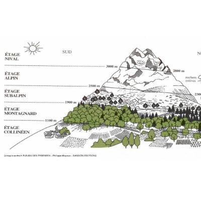 La découverte de la végétation au départ du lac de l'Olive