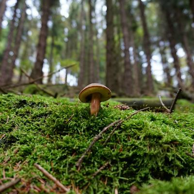 Le monde des champignons