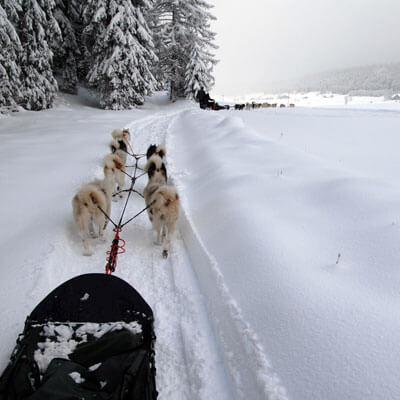 Descobreu la muntanya amb gossos de trineu
