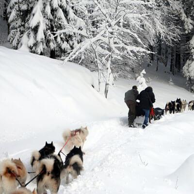 Dirigez un attelage de chiens de traîneaux à travers la forêt