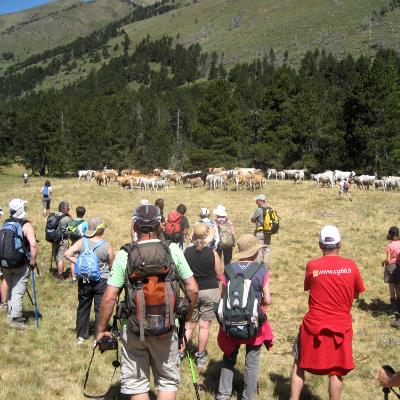 les éleveurs vous invite à la journée de la transhumance le 3ème jeudi de juillet