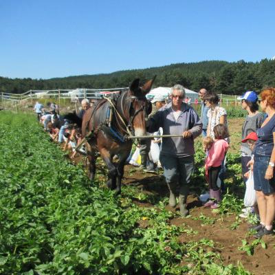Raymong Vilalta vous fait découvrir la cueillette des pommes de terre à l'ancienne